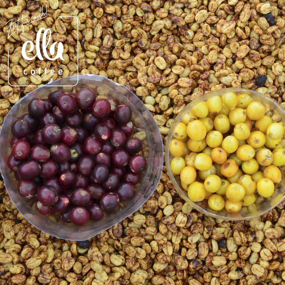 Kaffeekirschen ELLA Kaffee